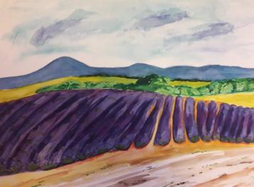 Champs de lavande, watercolor on paper